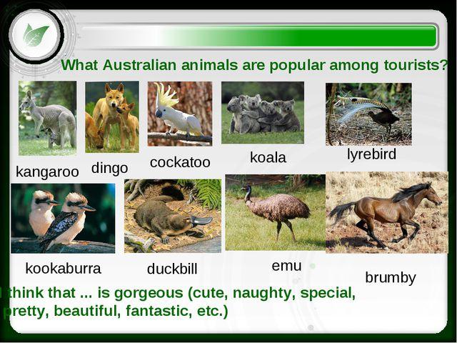 What Australian animals are popular among tourists? kangaroo dingo lyrebird e...