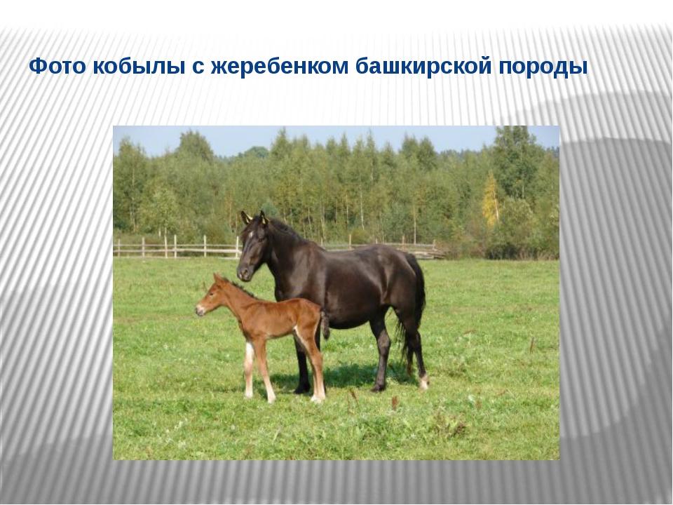 Фото кобылы с жеребенком башкирской породы