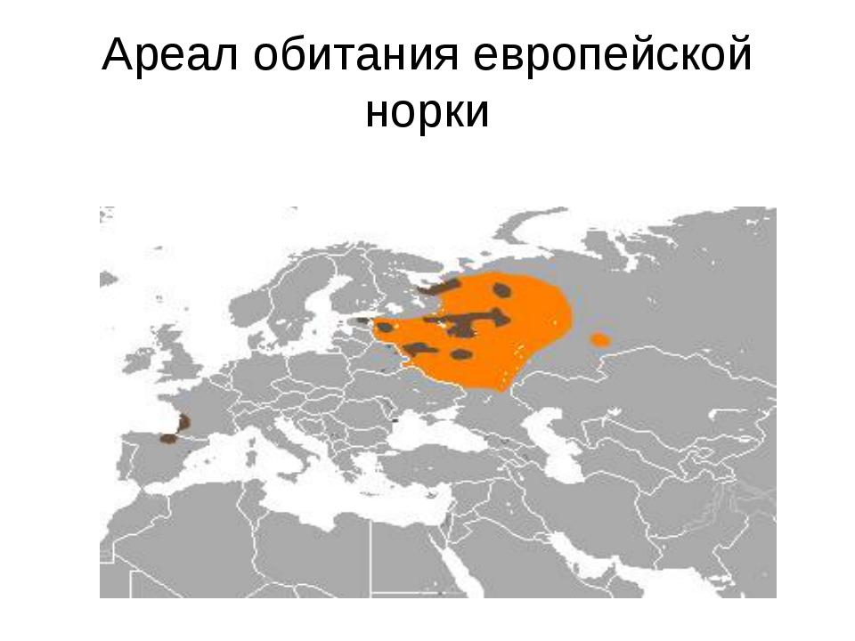 Ареал обитания европейской норки