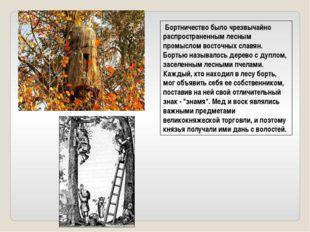Бортничество было чрезвычайно распространенным лесным промыслом восточных сл