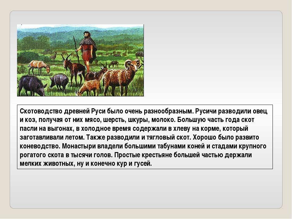 Скотоводство древней Руси было очень разнообразным. Русичи разводили овец и к...