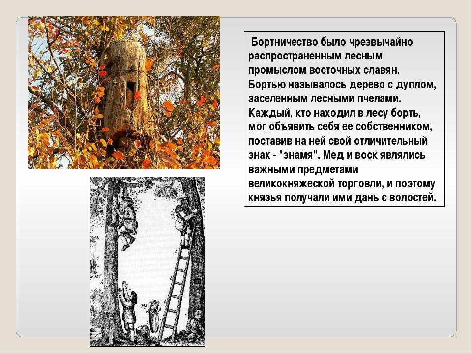 Бортничество было чрезвычайно распространенным лесным промыслом восточных сл...