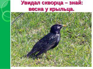 Увидал скворца – знай: весна у крыльца.