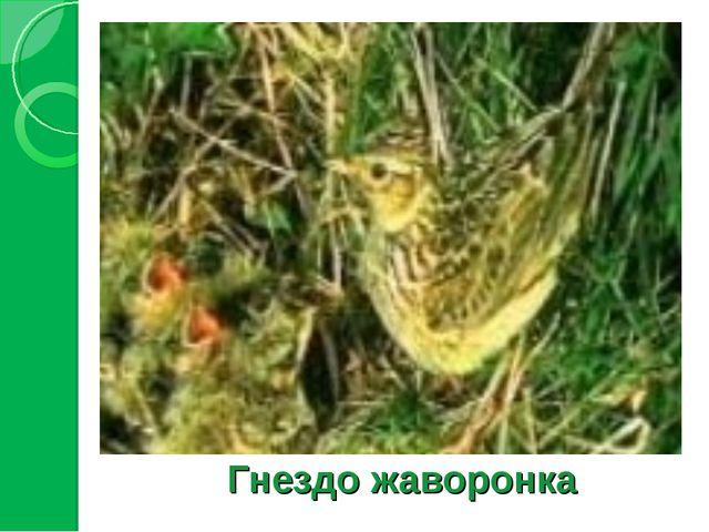 Гнездо жаворонка