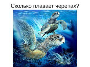 Сколько плавает черепах?
