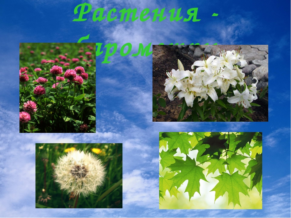 Растения - барометры