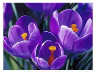 Весна, весна! Пришла весна: Тепло на крыльях принесла. И вот на самом солнцеп