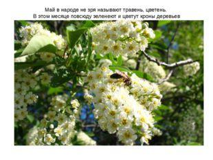 Май в народе не зря называют травень, цветень. В этом месяце повсюду зеленеют