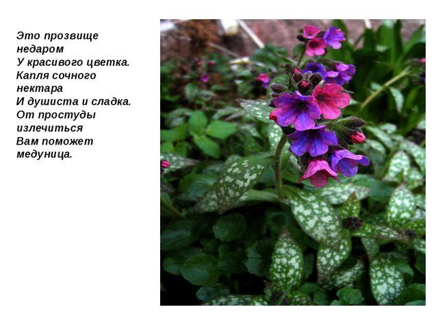 Это прозвище недаром У красивого цветка. Капля сочного нектара И душиста и сл...