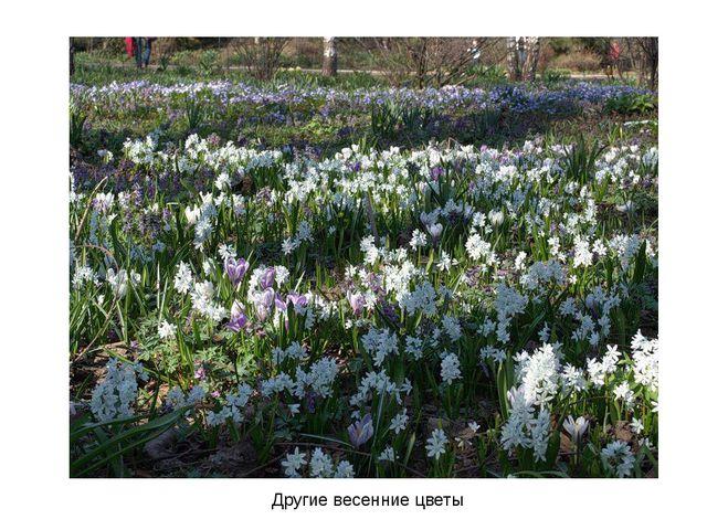 Другие весенние цветы