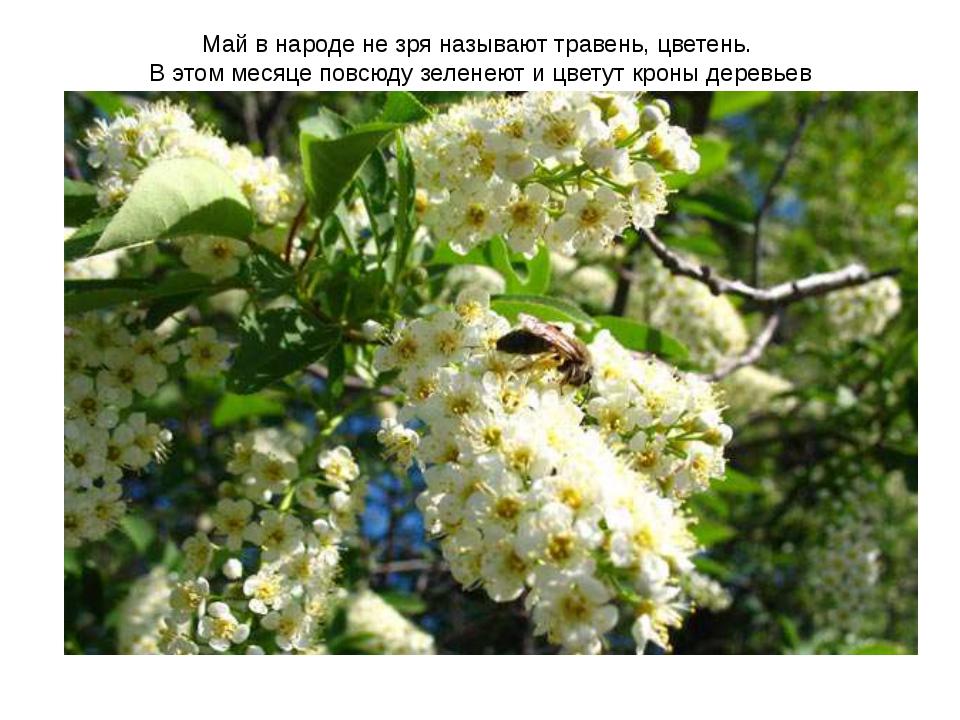 Май в народе не зря называют травень, цветень. В этом месяце повсюду зеленеют...
