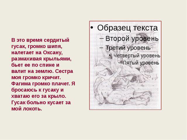 В это время сердитый гусак, громко шипя, налетает на Оксану, размахивая крыл...