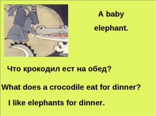 A baby elephant. Что крокодил еcт на обед? What does a crocodile eat for dinn