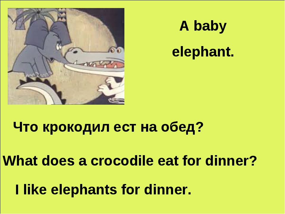 A baby elephant. Что крокодил еcт на обед? What does a crocodile eat for dinn...