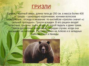 Гризли – крупный зверь: длина тела до 250 см, а масса более 400 кг. Шкура –