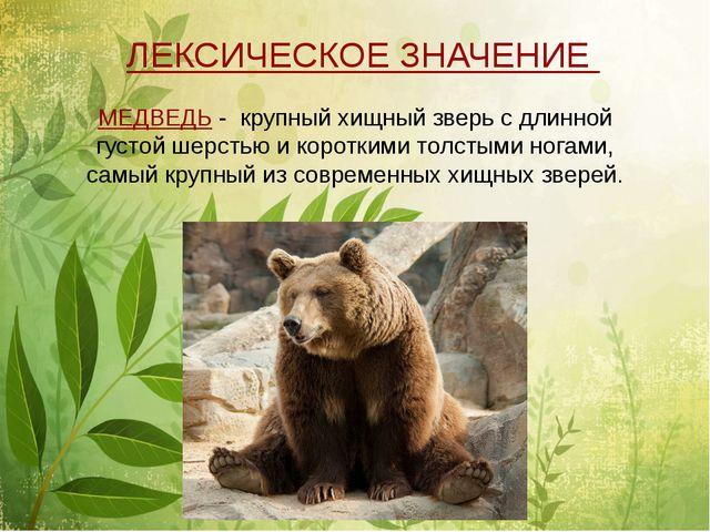МЕДВЕДЬ - крупный хищный зверь с длинной густой шерстью и короткими толстыми...