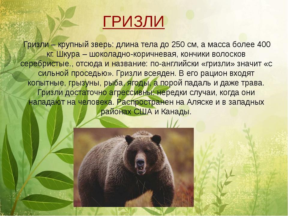 Гризли – крупный зверь: длина тела до 250 см, а масса более 400 кг. Шкура –...