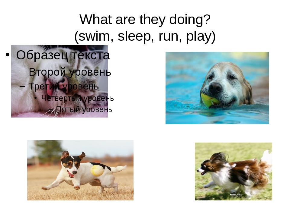 What are they doing? (swim, sleep, run, play)