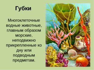 Губки Многоклеточные водные животные, главным образом морские, неподвижно при