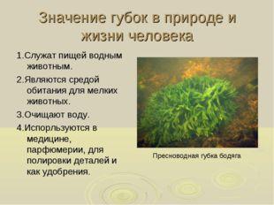Значение губок в природе и жизни человека 1.Служат пищей водным животным. 2.Я
