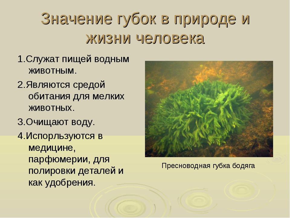 Значение губок в природе и жизни человека 1.Служат пищей водным животным. 2.Я...