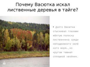 Почему Васютка искал лиственные деревья в тайге? Долго Васютка отыскивал глаз
