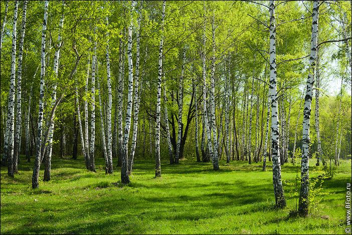 http://www.bfoto.ru/foto/spring/bfoto_ru_3925.jpg