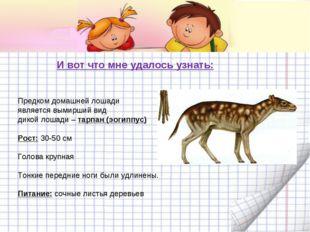 И вот что мне удалось узнать: Предком домашней лошади является вымирший вид д