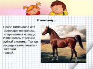 И наконец… После миллионов лет эволюции появилась современная лошадь. Изменил