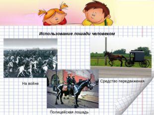 Использование лошади человеком На войне Средство передвижения Полицейская лош