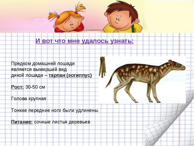 И вот что мне удалось узнать: Предком домашней лошади является вымирший вид д...
