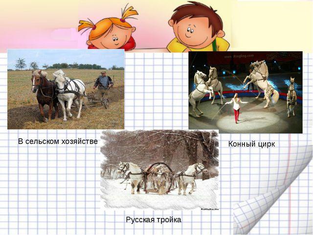 В сельском хозяйстве Конный цирк Русская тройка