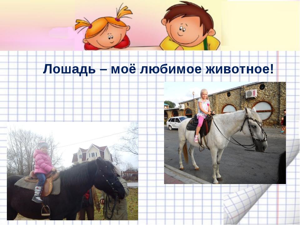 Лошадь – моё любимое животное!