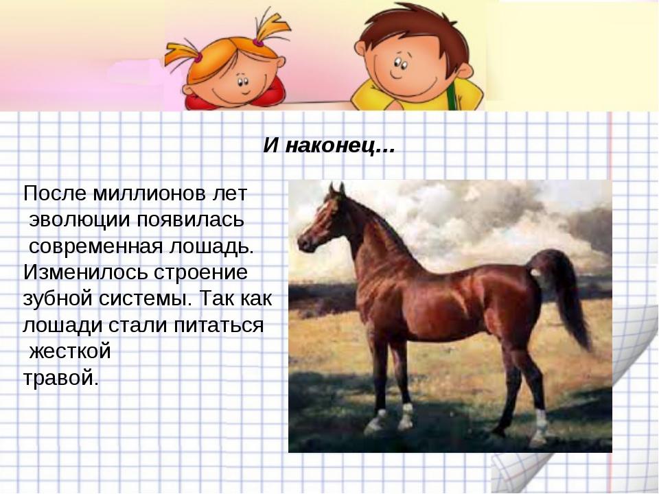 И наконец… После миллионов лет эволюции появилась современная лошадь. Изменил...