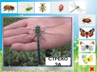 БАБОЧКА ЛИМОННИЦА Бабочка Лимонница - или круши́нница дневная бабочка из семе