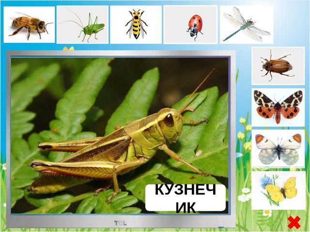 СТРЕКОЗА Стрекоза - отряд хищных, хорошо летающих насекомых. Крупные, с подв...