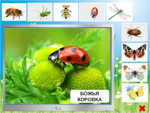 БАБОЧКА ЗОРЬКА Бабочка Зорька - или аврора, дневная бабочка из семейства бел...