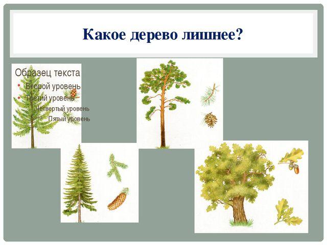 Какое дерево лишнее?