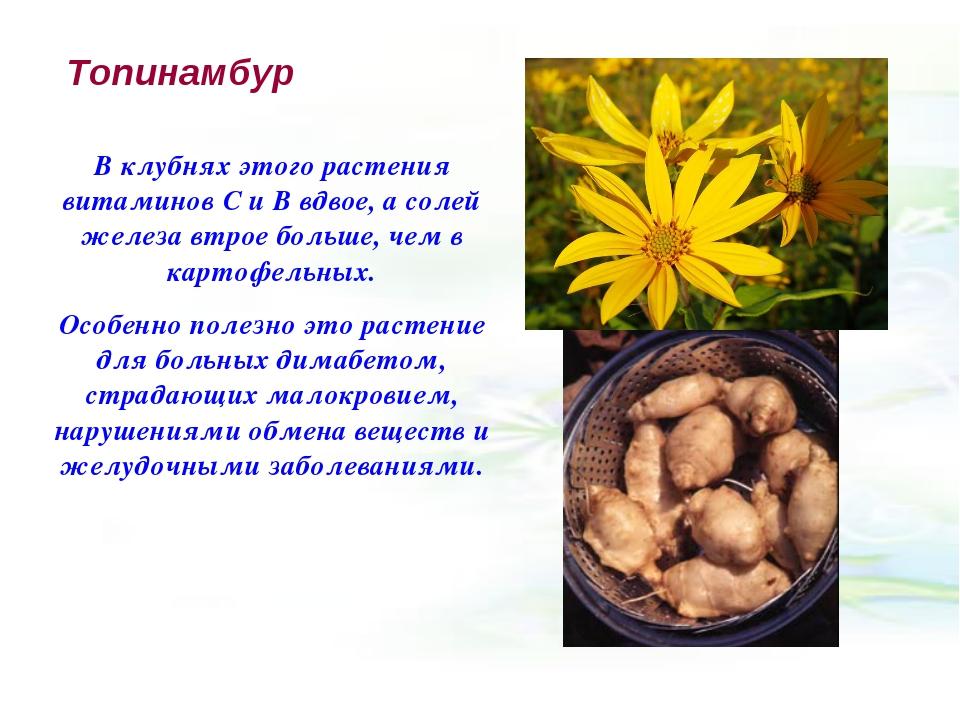 Топинамбур В клубнях этого растения витаминов С и В вдвое, а солей железа втр...