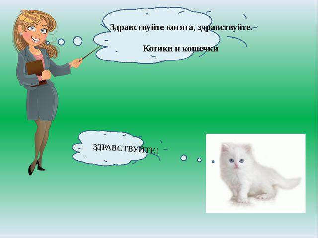 Здравствуйте котята, здравствуйте. Котики и кошечки ЗДРАВСТВУЙТЕ!