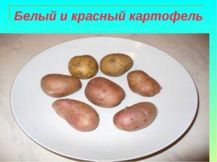 Белый и красный картофель