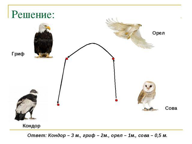 Решение: Кондор Гриф Орел Сова Ответ: Кондор – 3 м., гриф – 2м., орел – 1м.,...