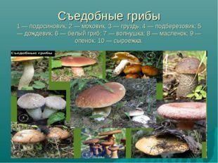 Съедобные грибы 1 — подосиновик; 2 — моховик; 3 — груздь; 4 — подберезовик; 5