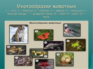 Многообразие животных 1 — тигр; 2 — бабочка; 3 — снегирь; 4 — квакша; 5 — кат