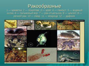 Ракообразные 1 — креветка; 2 — бокоплав; 3 — краб; 4 — лангуст; 5 — водяной о