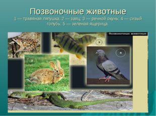 Позвоночные животные 1 — травяная лягушка; 2 — заяц; 3 — речной окунь; 4 — си