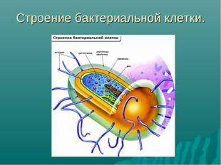 Строение бактериальной клетки.