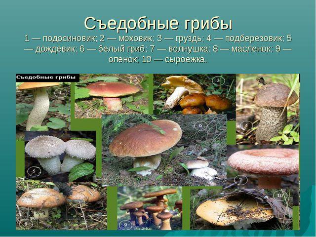 Съедобные грибы 1 — подосиновик; 2 — моховик; 3 — груздь; 4 — подберезовик; 5...