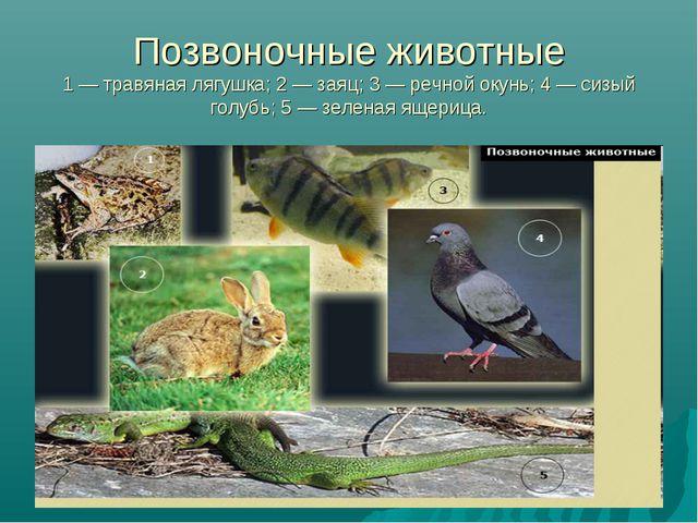 Позвоночные животные 1 — травяная лягушка; 2 — заяц; 3 — речной окунь; 4 — си...