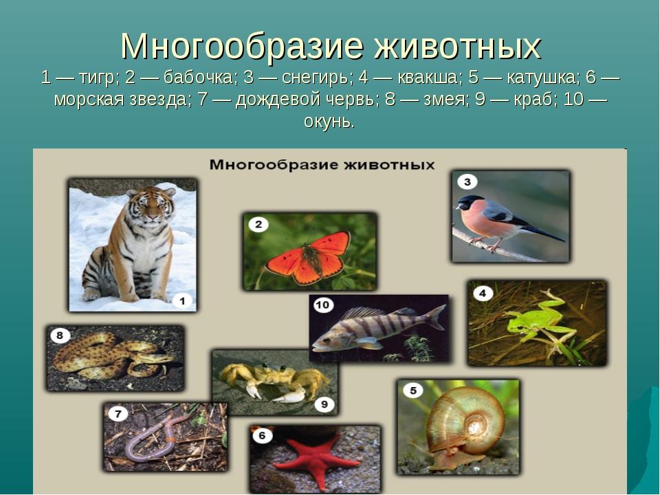 Многообразие животных 1 — тигр; 2 — бабочка; 3 — снегирь; 4 — квакша; 5 — кат...